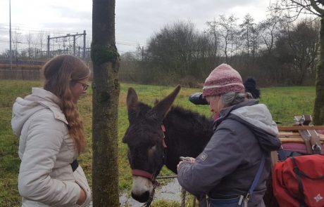 Wandelen met ezels (Zwolle)